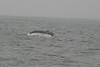 Whale Watching Jul 2012 :